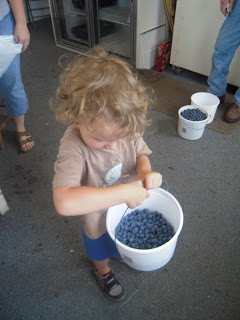 Gone Berry Picking!
