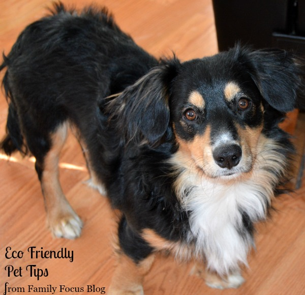 eco friendly pet tips