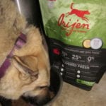 Green Pet Care Tips To Protect Your Pets