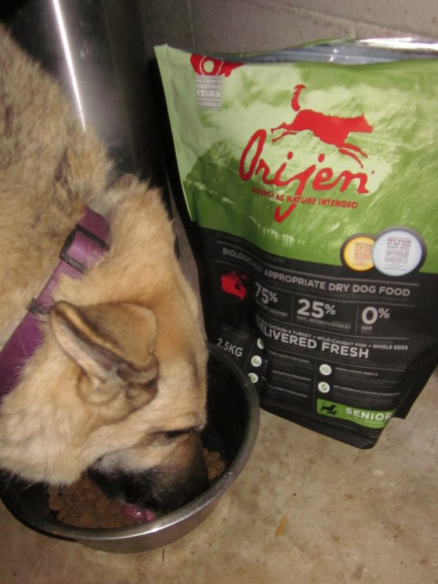 green pet food