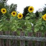Is Your Garden Environmentally Friendly?