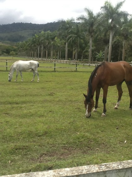 Horses Casa Turire