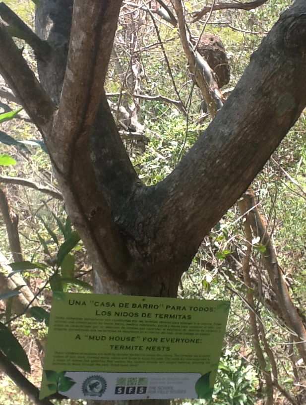 termite nest in a tree