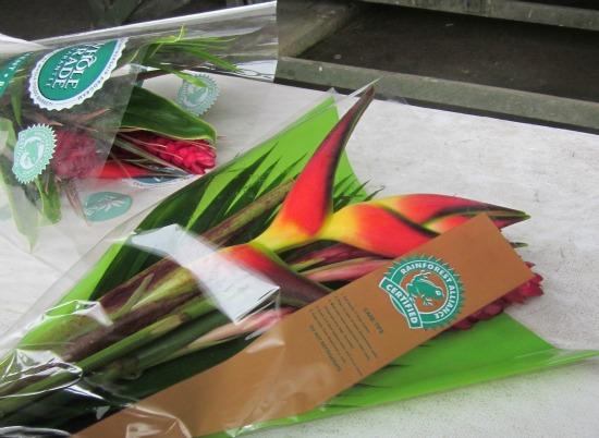 Rainforest Alliance Certified Flowers / Family Focus Blog