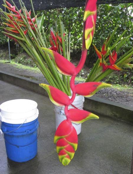 hanging tropical flower / Family Focus Blog