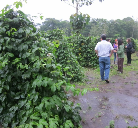 passionfruit farm / Family Focus Blog