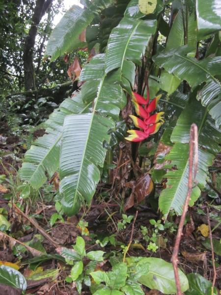 tropical flower flower / Family Focus Blog