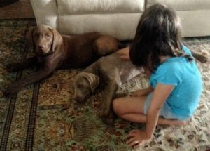 Creating a Loving and Safe Relationship Between Your Toddler and Dog