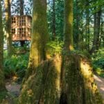 Treehouse Masters World Renowned Treehouses