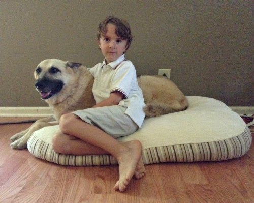 Essentia Luxury Dog Bed Review and Giveaway | Family Focus Blog