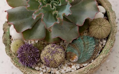 succulents and seashell garden- 4 crafts to do with kids