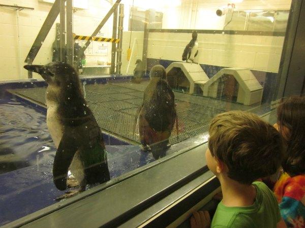 penguins aquarium Atlanta