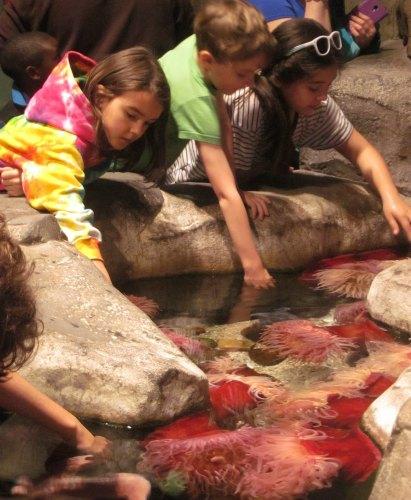 touchpools at GA aquarium