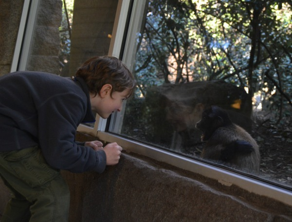 Chattanooga, TN Zoo