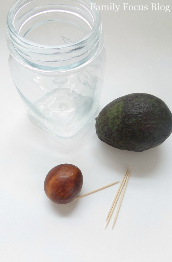 How to Grow an Avocado from Seed