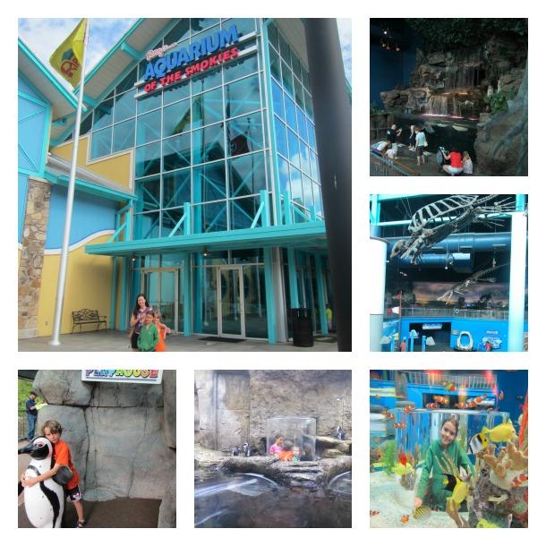 aquarium of the smokies