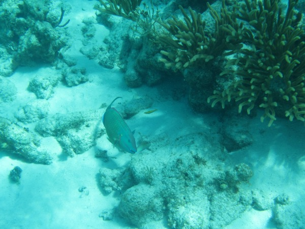 Explore The Beauty Of Caribbean: George Town, Grand Cayman- Stingray City And Barrier Reef