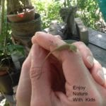 Classic Nature Games Kids Love- Catch A Lizard