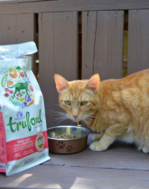consistent pet diet