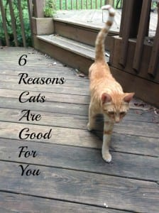 Cats Are Good For You