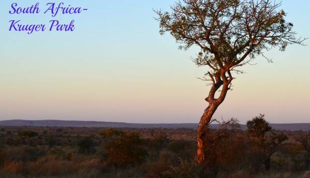 Safari In South Africa:  Kruger Park Vacation