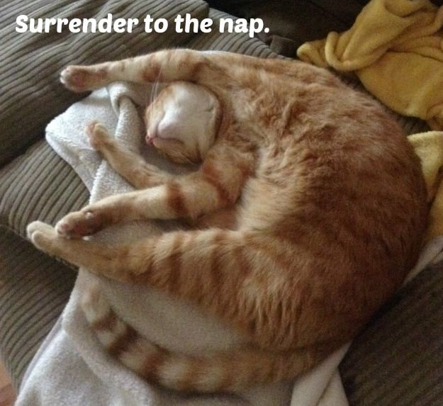 Surrender cat nap