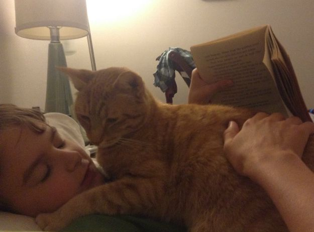 cat book break