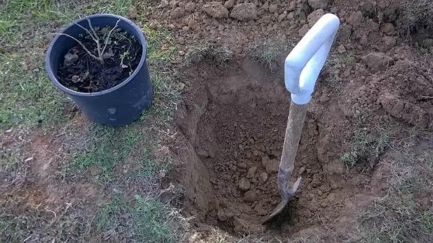deep hole for tree