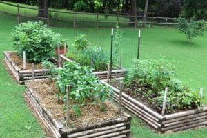 10 Tips On Vegetable Gardening For Beginners