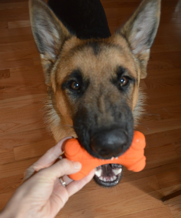 dog play with dura bone