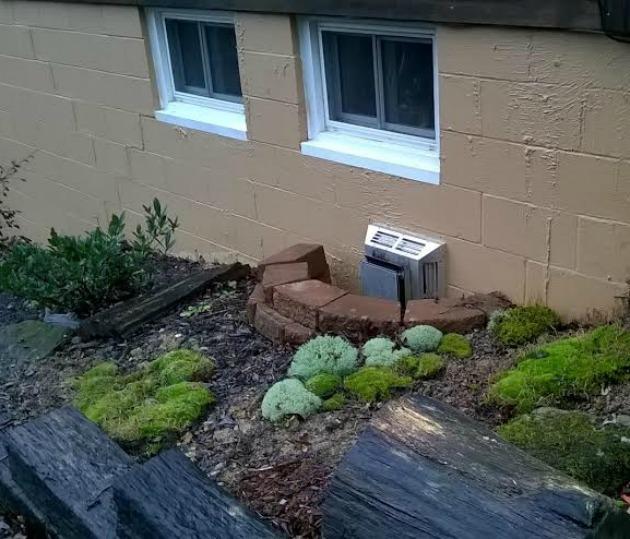 grow moss garden
