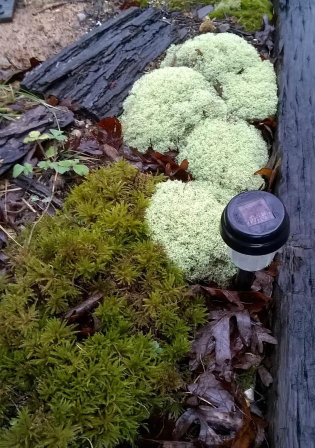 moss and lichen garden