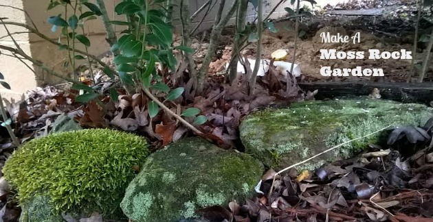 peat moss gardens