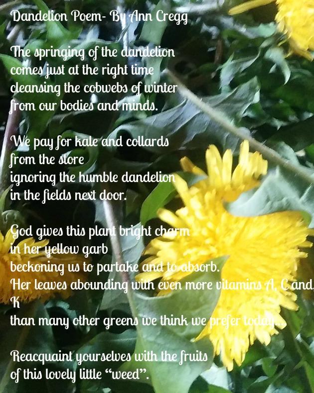 Dandelions Poem   dandelion poetry