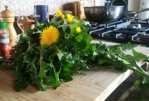 How To Cook Dandelion Greens- Wildly Edible Yard Weeds!