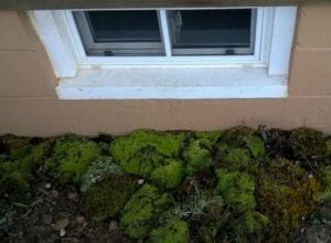 Basement Window Wells DIY Natural Splatter Guard