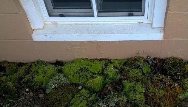 Basement Window Wells DIY Natural Splatter Guard