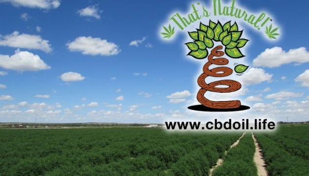 What is Hemp Oil and Hemp Seed Oil Uses (CBD Hemp Oil Legal In All 50 States )