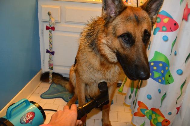 dog grooming dryers