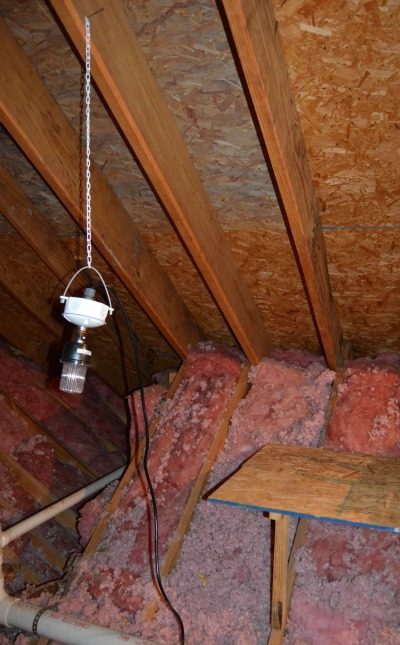 How To Get Rid Squirrels In Attic