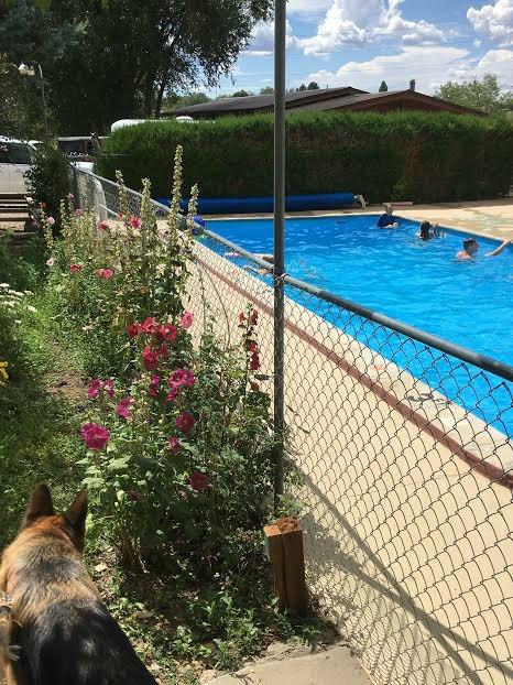 cortez mesa verde KOA pool
