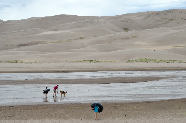 Dog at Great Sand Dunes