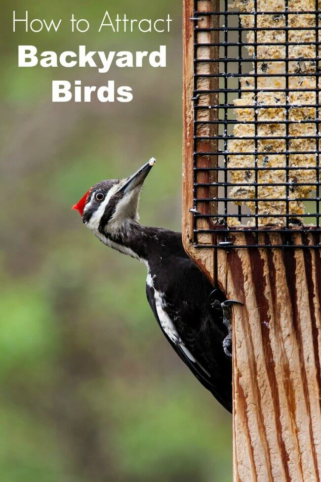 how to attract birds to your yard family focus blog