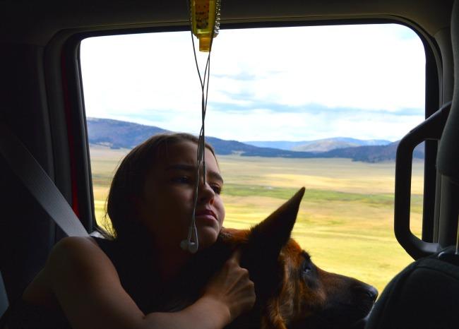 dog car travel tips
