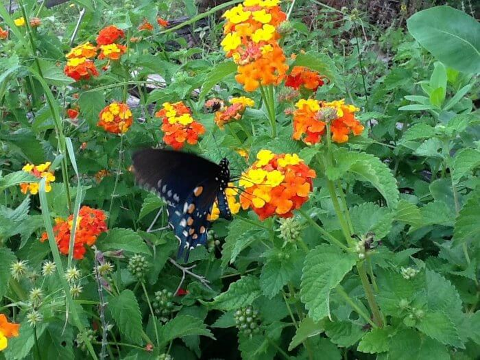 butterfly watching tx state park