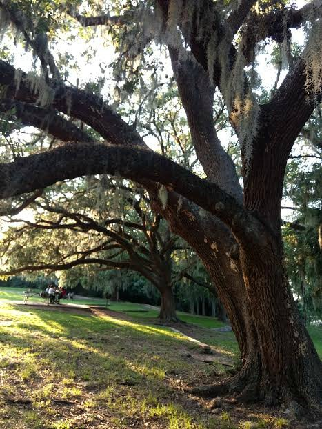 relax in nature brazos bend