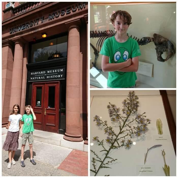 Harvard Museum Natural History