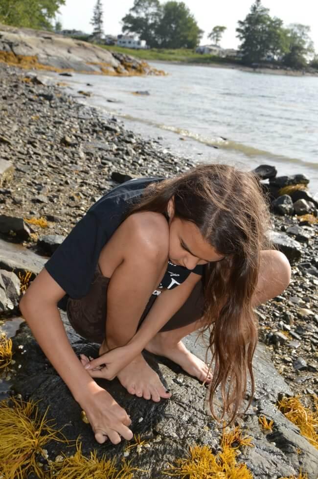 Maine Oceanside Rock Exploration
