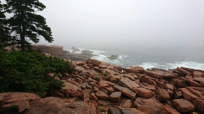 Misty Acadia National Park