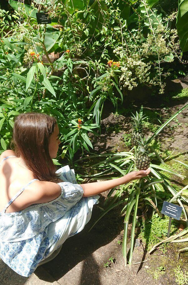 ann arbor botanical gardens